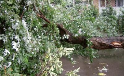 copac cazut